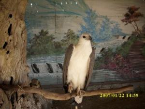 Burung Rangkok Bali, ini Juga ada di Pulau Penyu